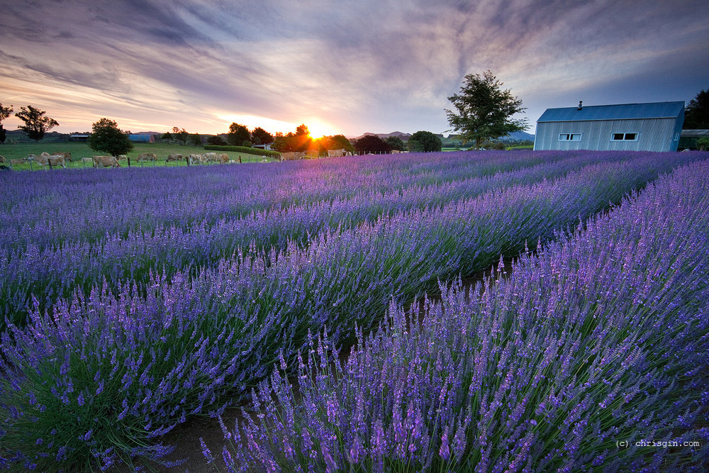 Photograph Purple Dusk by Chris Gin on 500px