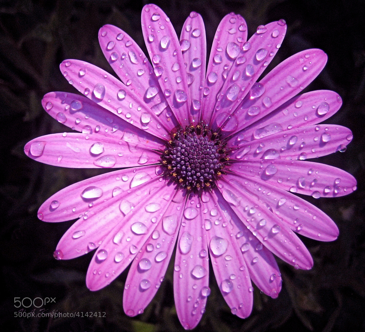 Photograph Dewdrops by Valerie Anne Kelly on 500px