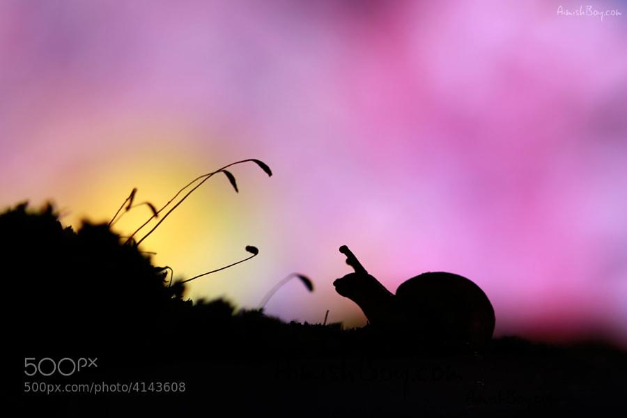 Photograph Sunrise Friends by AimishBoy (Nadav Bagim) on 500px