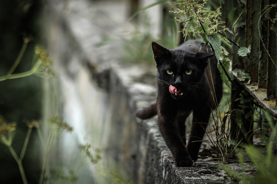 Going to eat you by Minori B on 500px.com