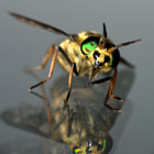 This Deerfly (Chrysops relictus) with it's beautiful eyes found refuge on our window.