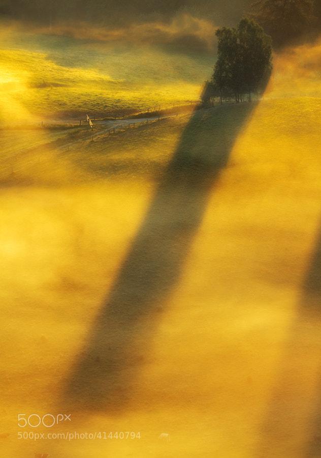 Photograph Tree of light by Paweł Uchorczak on 500px