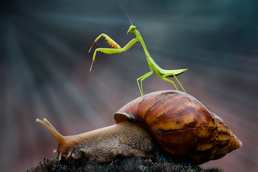 Photograph mantis and snail by  Hendy Mp on 500px