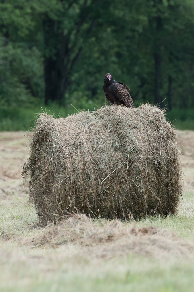 Photograph King of the Bale by Jessica Hendelman on 500px
