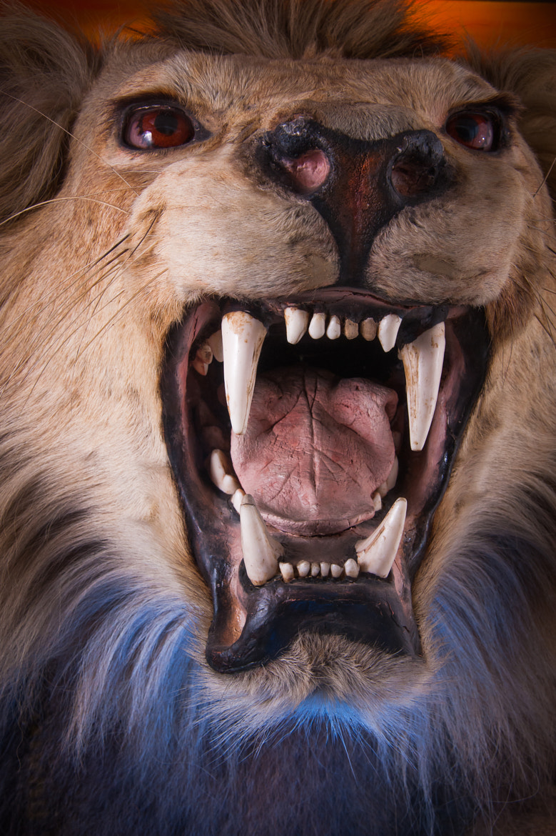 Photograph Victorian Lion by Dave Willis on 500px