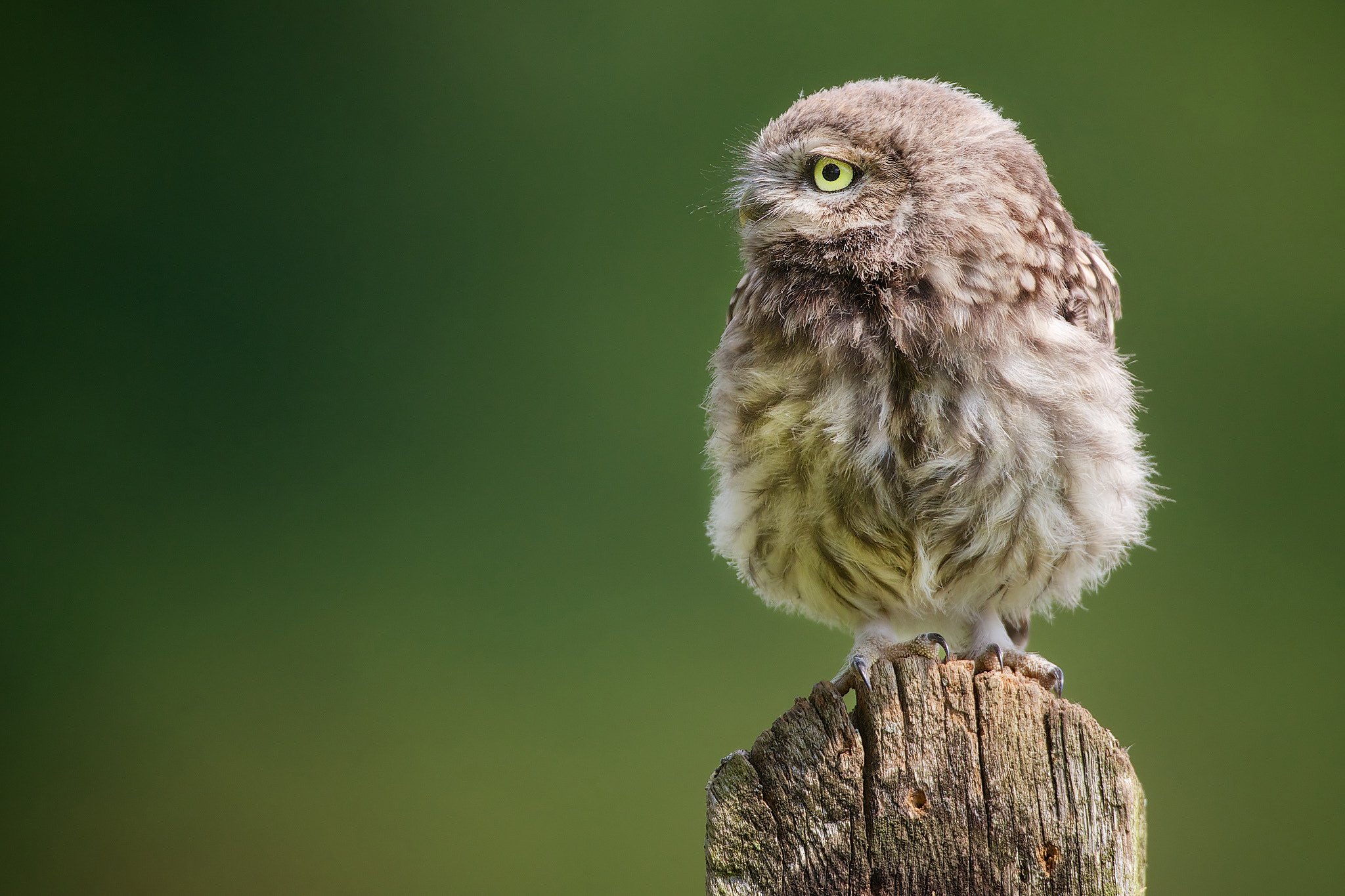 Photograph waiting for dad.... by Mark Bridger on 500px