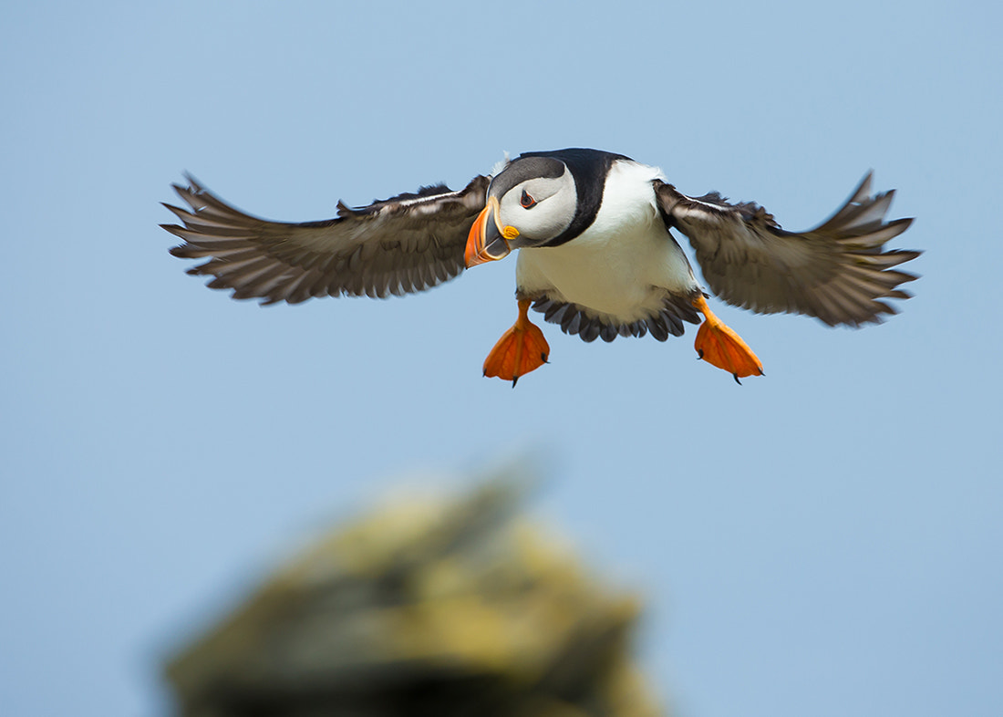 Photograph In Flight by Giedrius Stakauskas on 500px