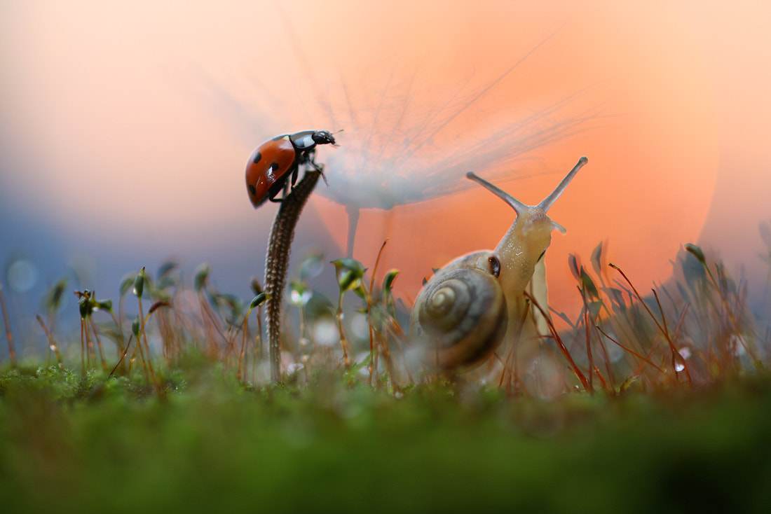 Photograph Ladybug and snail by Vadim Trunov on 500px