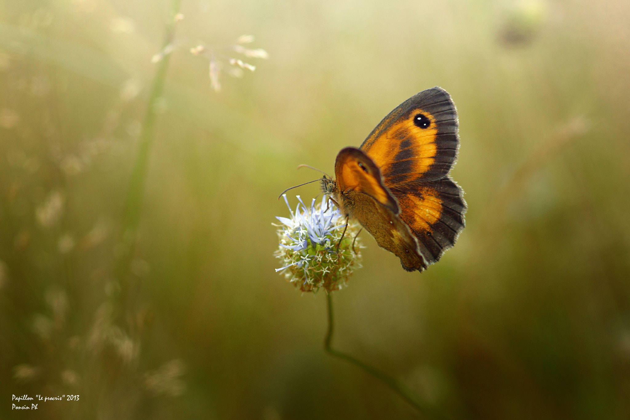 Photograph Papillon by Philippe PONSIN on 500px