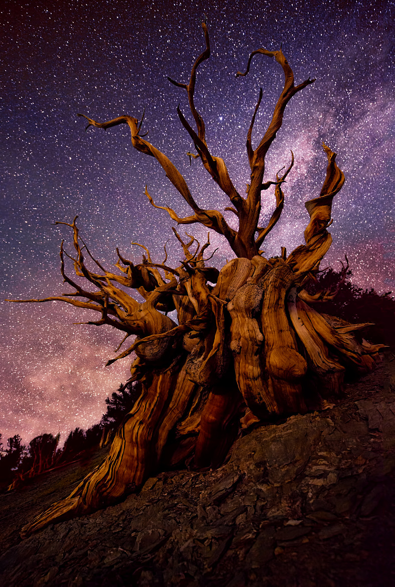 Photograph Untitled by Doug Solis on 500px