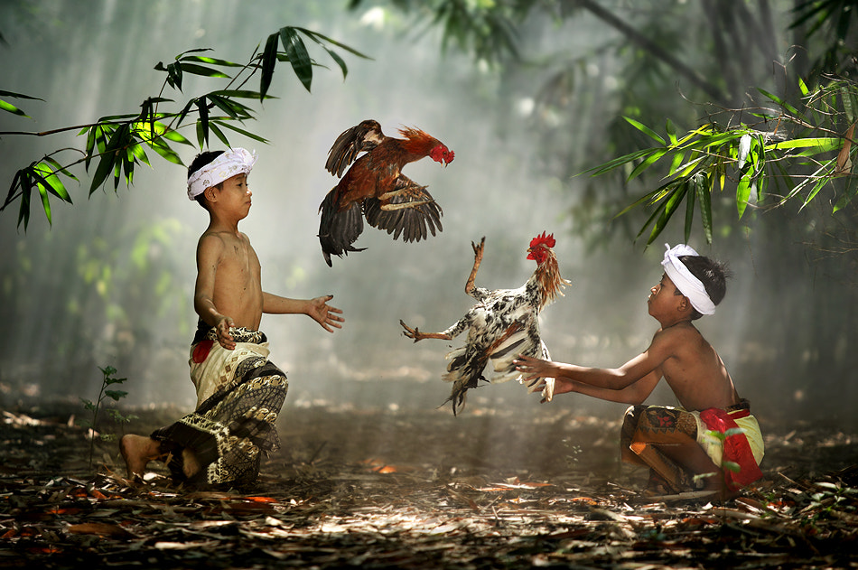 Photograph Cockfight by Ario Wibisono on 500px