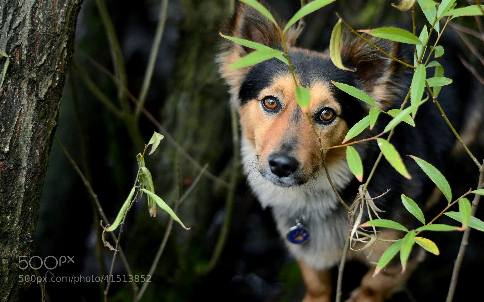 Photograph Dog by Alexandr Churbakov on 500px