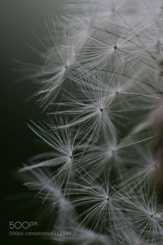 Photograph before the wind by Jasper van den Heuvel on 500px