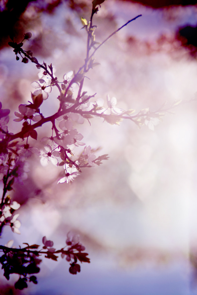 Photograph My spring is you ♥ by Laura Norinkevičiūtė on 500px