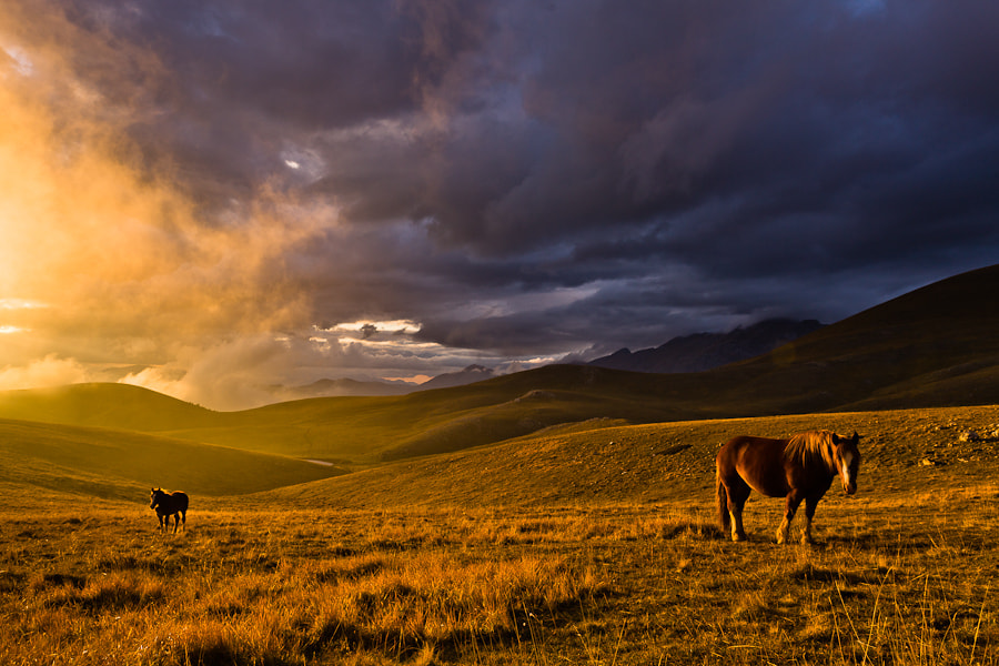 Photograph Horses in the Light by Hans Kruse on 500px