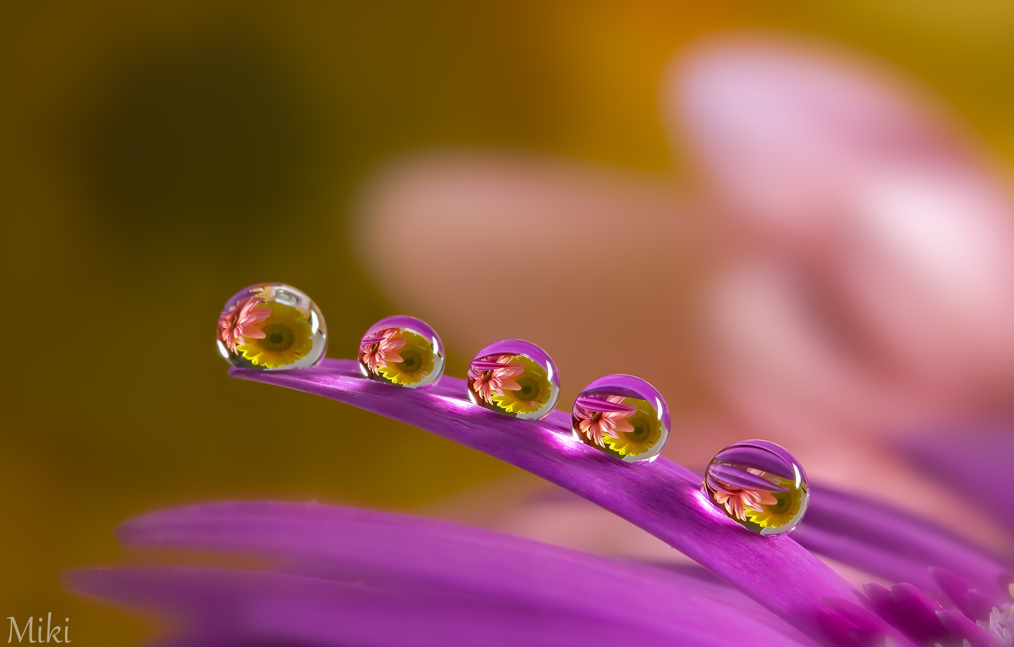 Photograph Five Star by Miki Asai on 500px