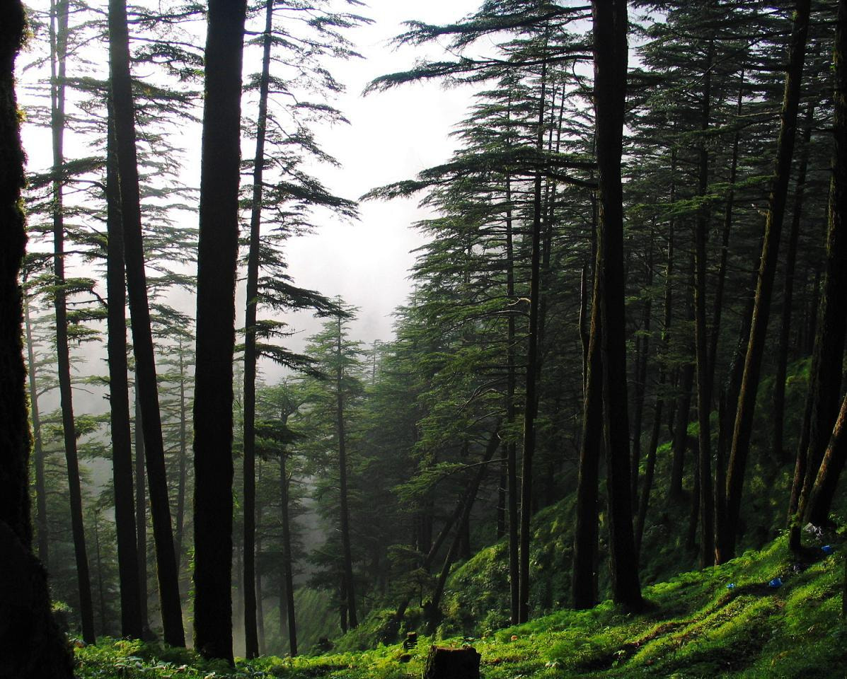 Photograph Woods by Neeraj Jain on 500px