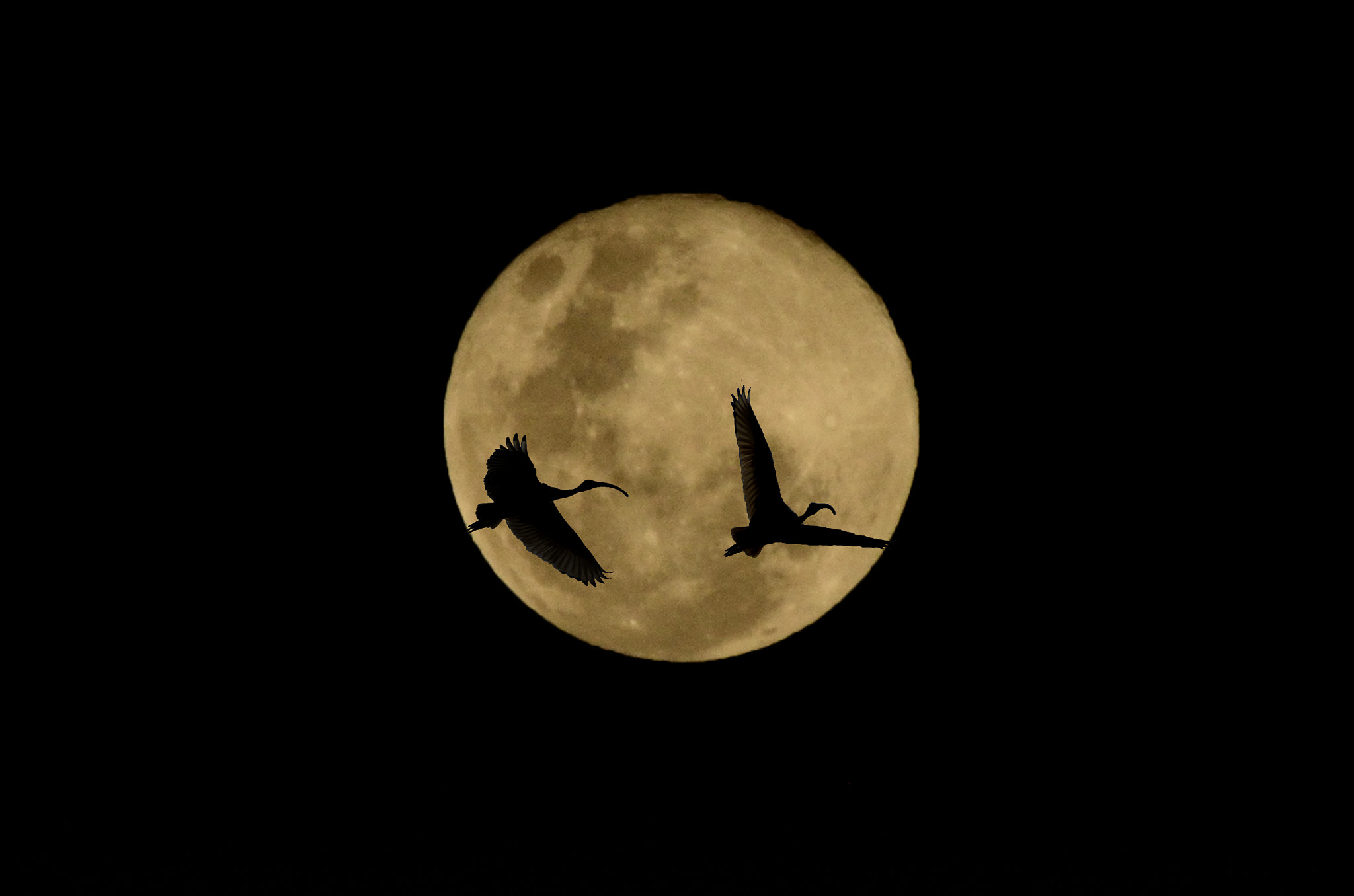 Photograph Yellow moon by KVlion Photo's on 500px
