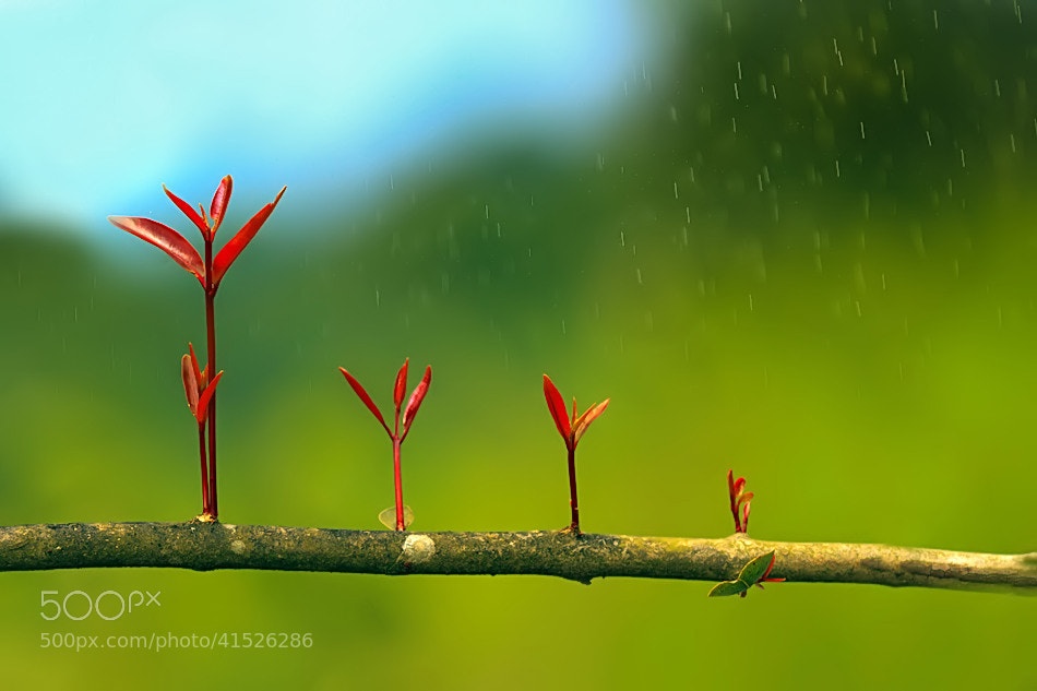 Photograph New beginning by Nitin  Prabhudesai on 500px