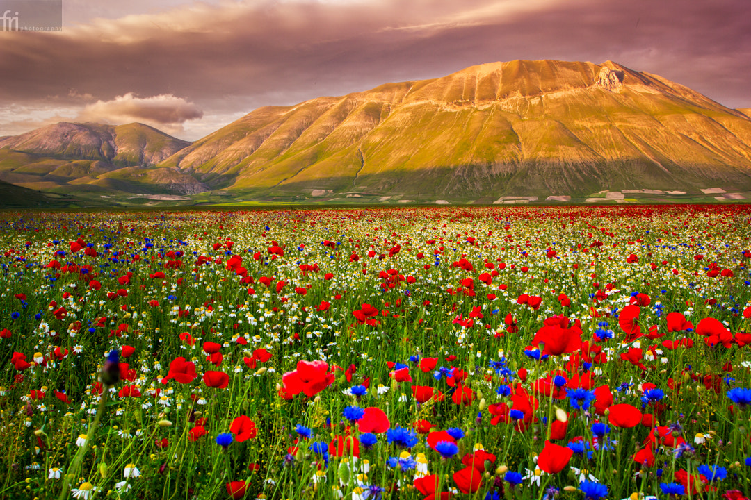 Photograph In Bloom by Francesco Riccardo Iacomino on 500px