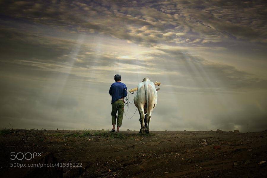 Photograph friendship under the light... by budi 'ccline' on 500px