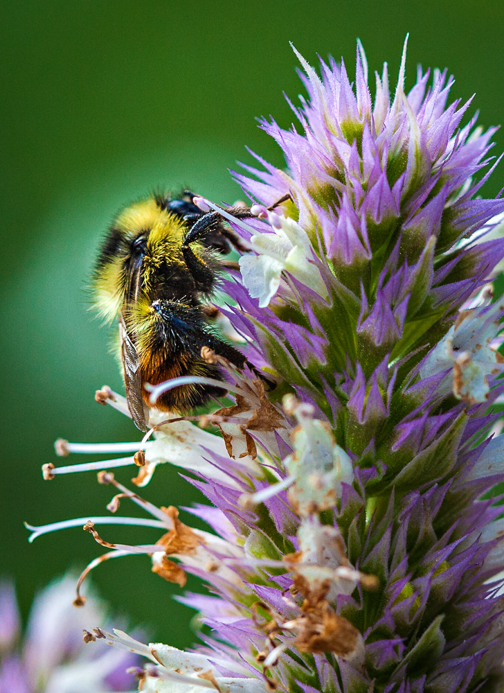 Photograph Bee's Knee by Paul Bartell on 500px