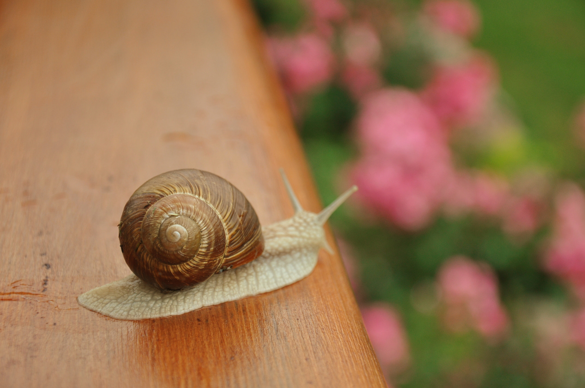 Photograph Big snail on our balcony by Celine Hlms on 500px