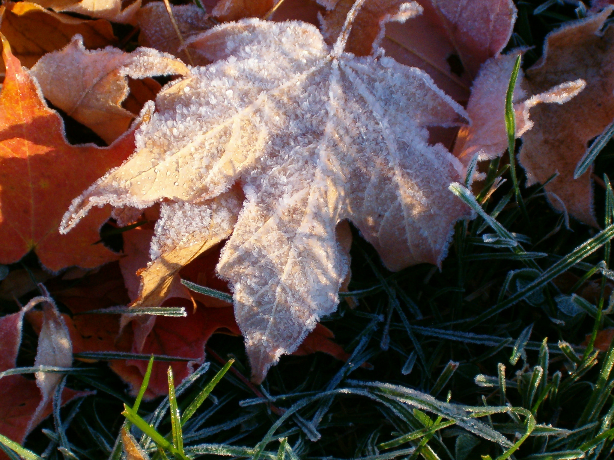 Photograph Fall Frost by Jenny Runnoe on 500px