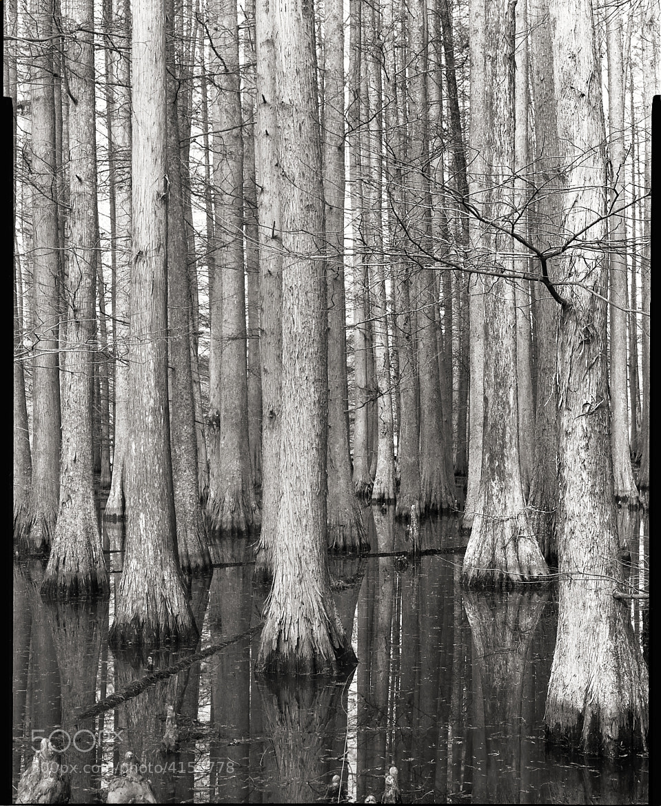 Photograph Durham County - Cypress by Holden Richards on 500px