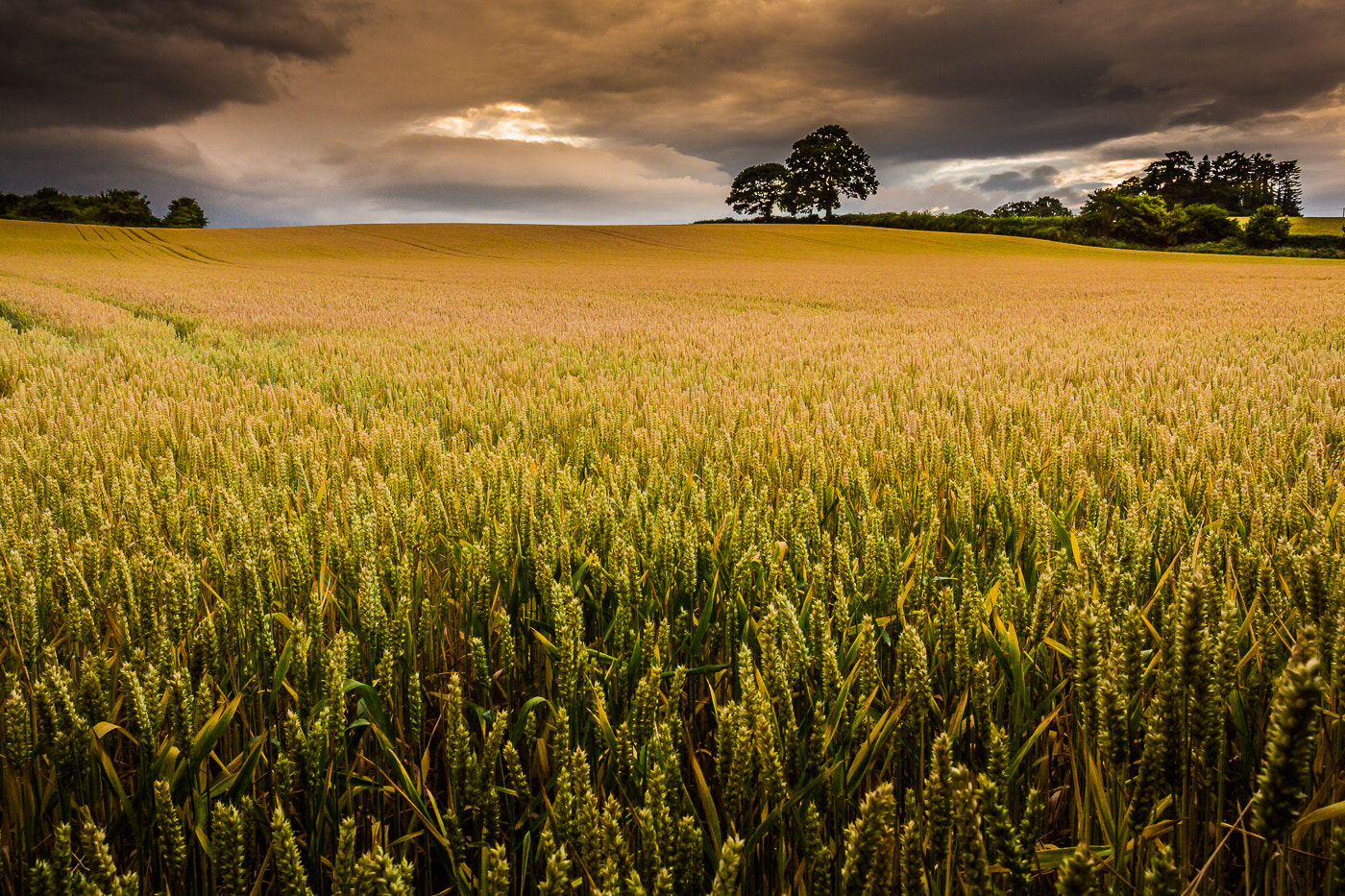 Photograph Barley Moods by Alan Coles on 500px