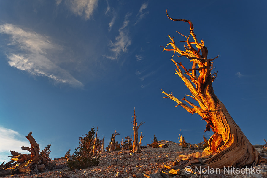 Photograph Bristlecone First Light by Nolan Nitschke on 500px