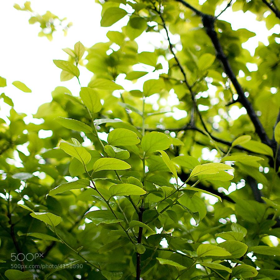 Photograph Green Light II by Kyungsu Jang on 500px