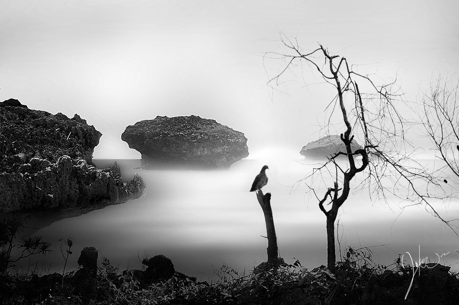 Photograph Untitled by 3 Joko on 500px