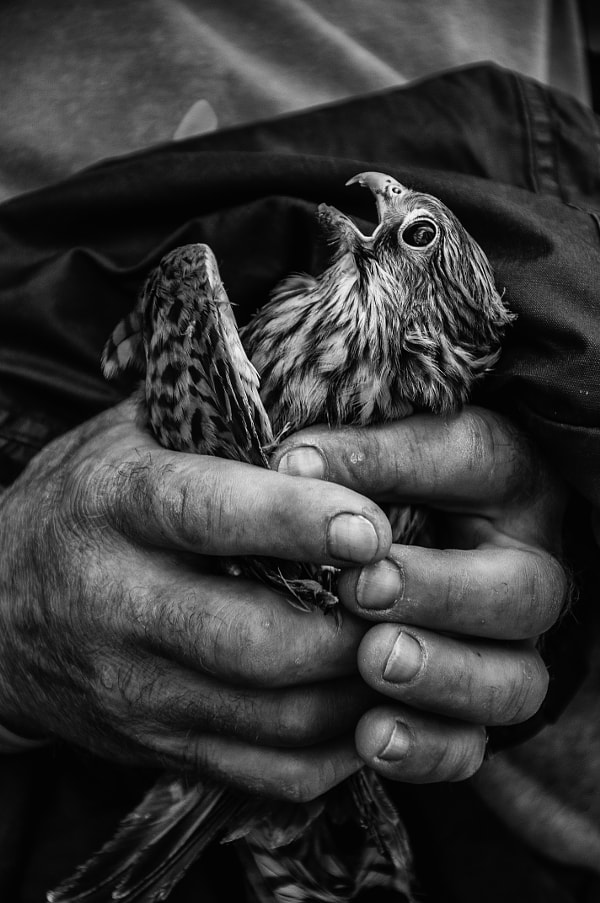 Photograph Rescue mission by Sebastian Bastex on 500px