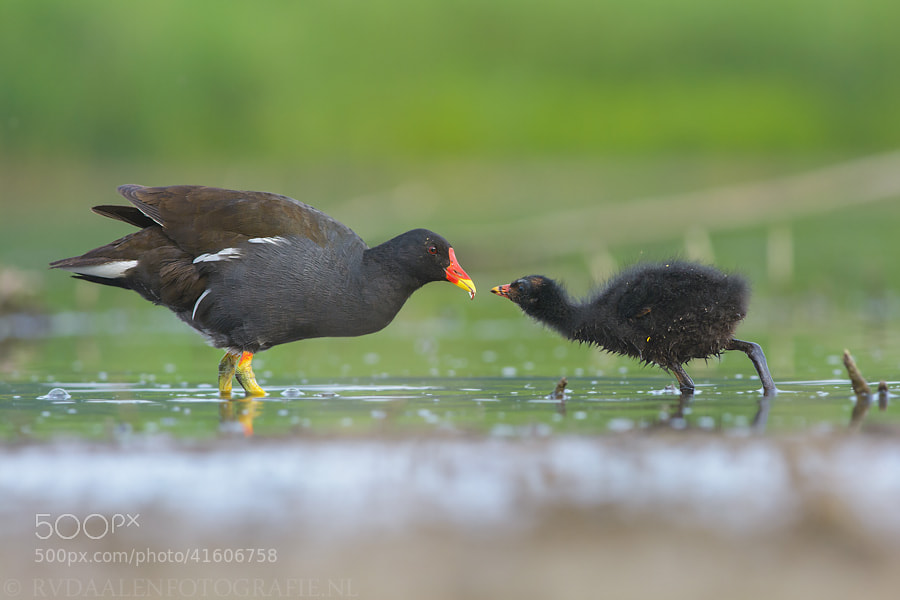 Photograph Feeding... by Remco van Daalen on 500px