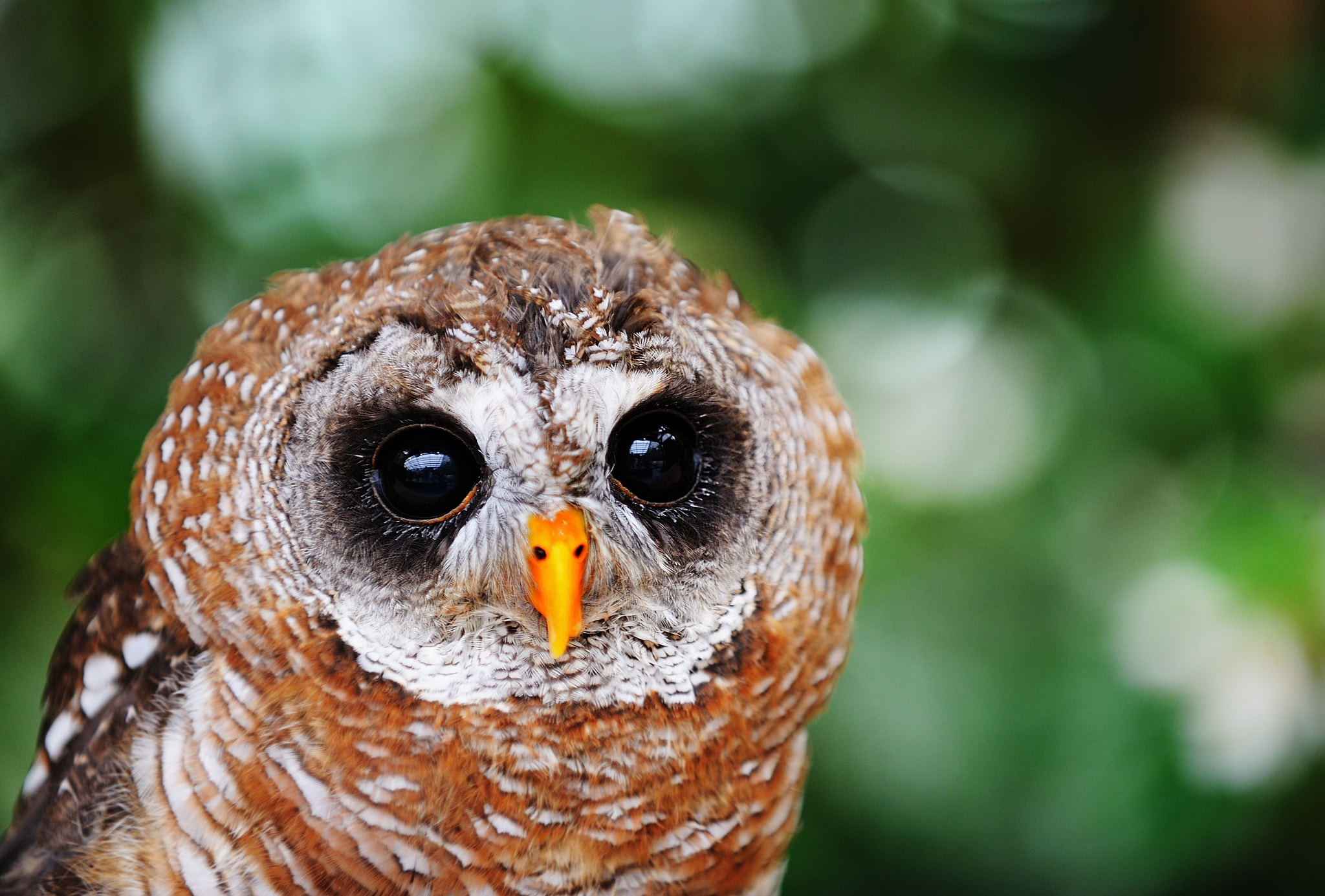 Photograph Round eyes by Tomoo Itoh on 500px