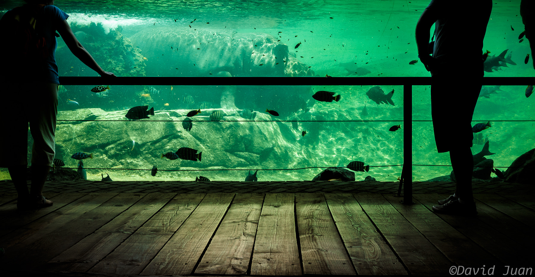 Photograph The house of the hippo by David Juan on 500px