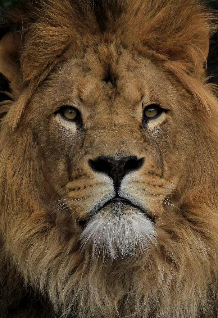 Photograph Lion King by Astrid  Stokvis on 500px