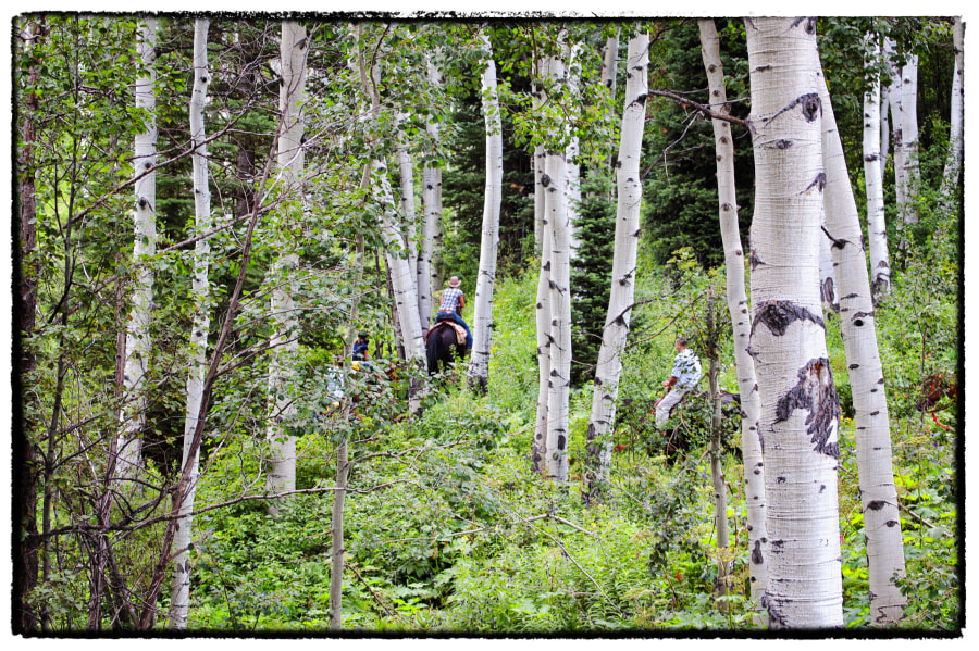 Riders In The Aspens