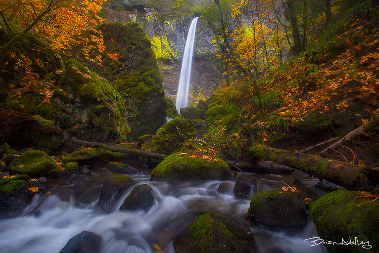 Photograph November Falls. by Brian Adelberg on 500px