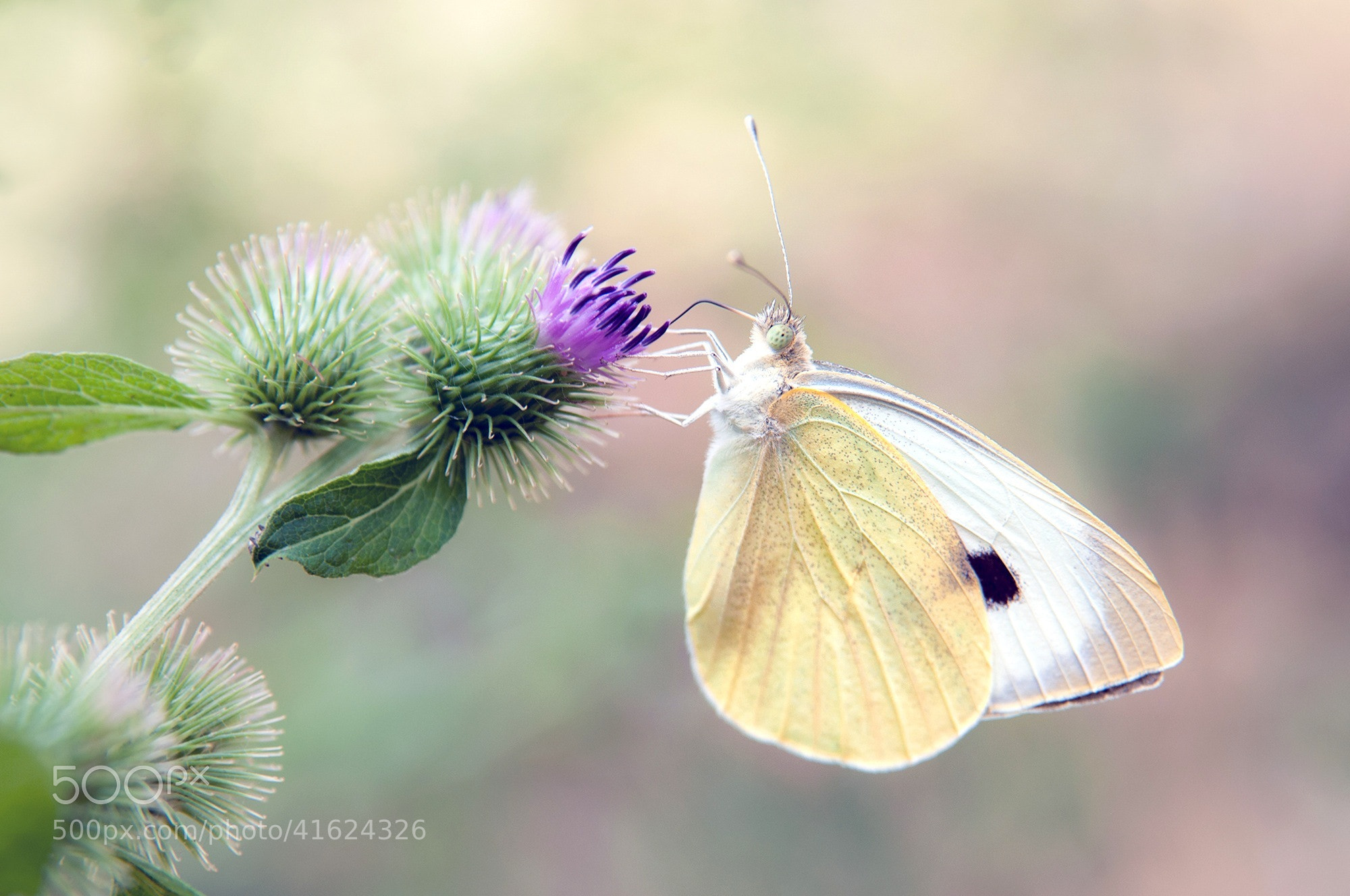 Photograph Butterflies in Freedom XVIII. by Juan Dorado on 500px