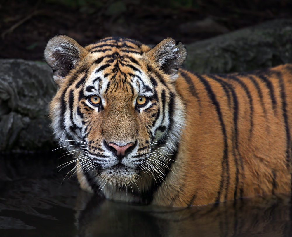 Photograph Bathing by Klaus Wiese on 500px