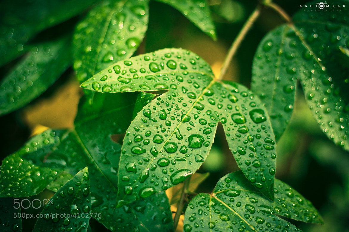 Photograph Monsoon Mornings! by Abhinay Omkar on 500px