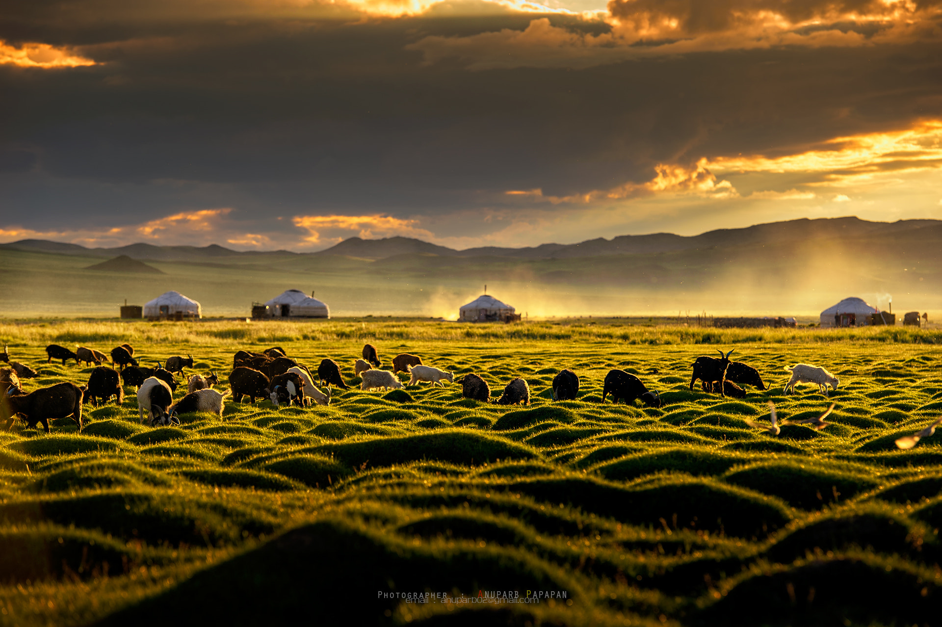 Photograph Mongolia's Golden Time by Anuparb Papapan on 500px
