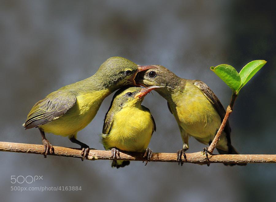 Photograph overhead feeding by Prachit Punyapor on 500px