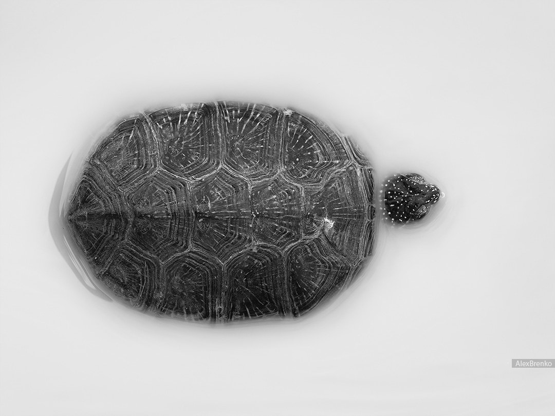 Photograph turtle in milk :) by Alex Brenko on 500px