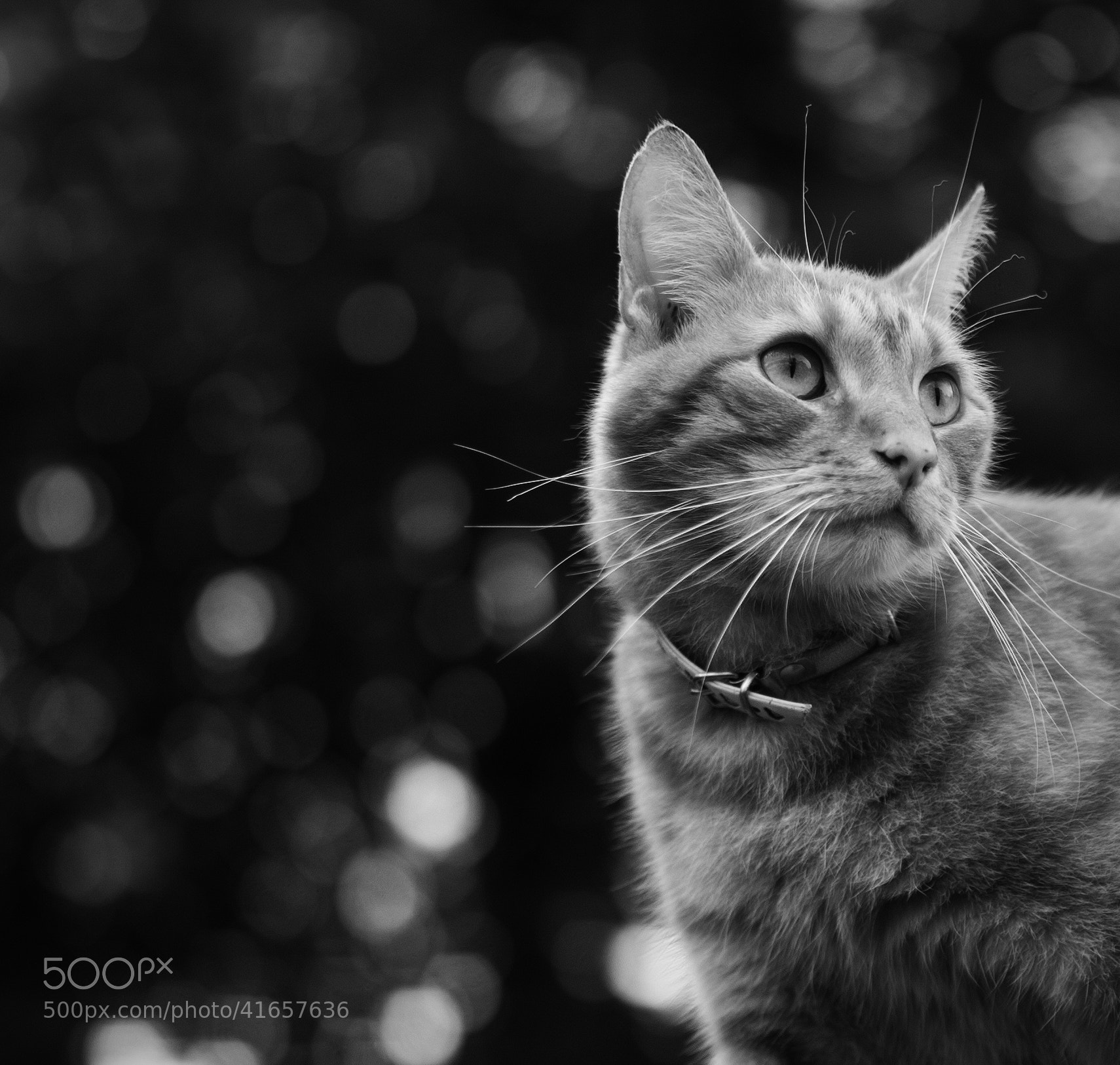 Photograph Obey the cat by Szilvia Zarda on 500px