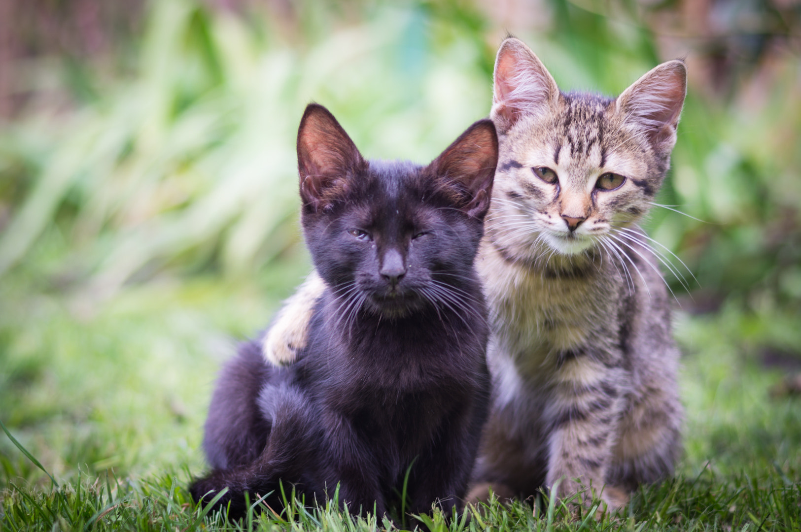 Photograph Cats that are best friends by Alex Demchenko on 500px