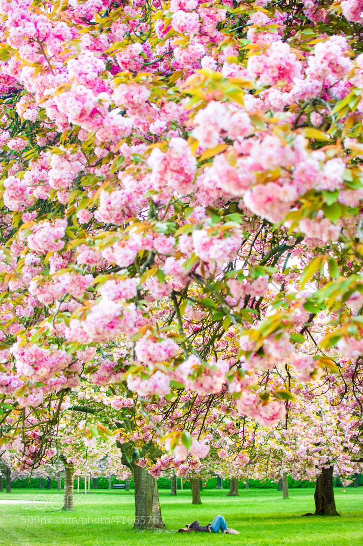 Photograph Sleeping garden by Maryana Lemak on 500px