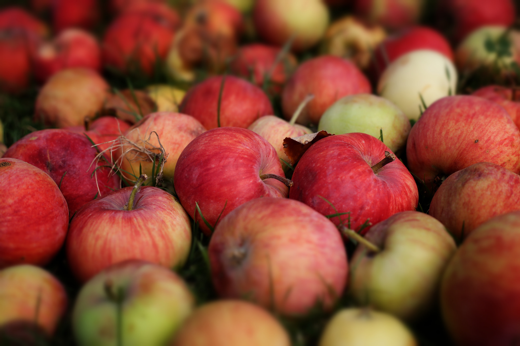 Photograph Just Apples by Florian Feuchtner on 500px
